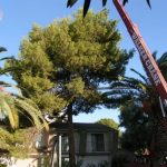 tree pruning las vegas