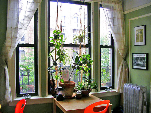 Plants can add a magical element to any room.