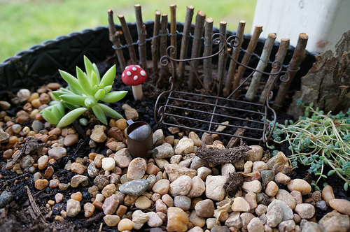 Tiny details such as these  mini toadstools will bring your tray garden to life.