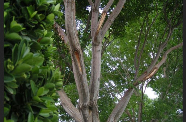 tree removal las vegas