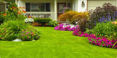 Advantages Of Lawns