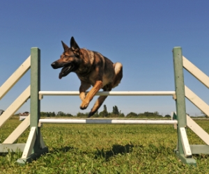 4 Dog Training Mistakes You Should Avoid At All Costs