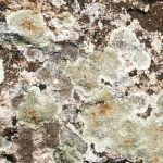 4 Reasons Why Mold Inspection Is Important