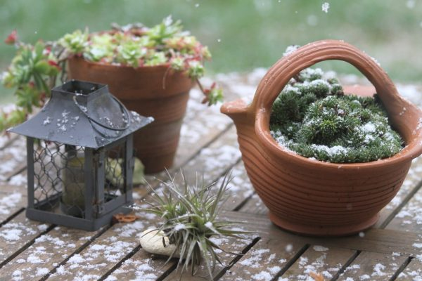 Bring Your Garden to Life Through the Winter Months