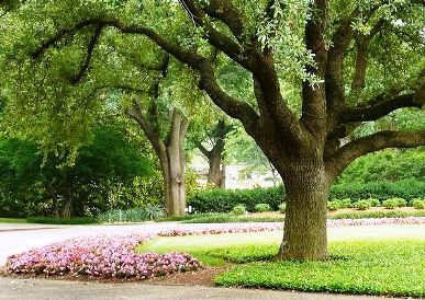 Analyzing The Health Of Your Trees After Summer