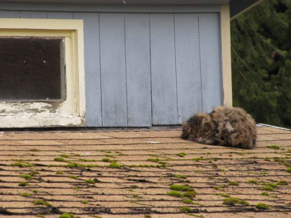 Keeping Critters Off Of Your Roof