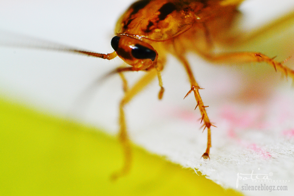 Could A Cockroach Really Survive A Nuclear Explosion?