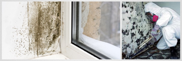 What To Do If You Think Your Home Has A Mold Problem