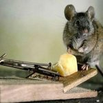 4 Humane Ways To Rid Your House Of Unwanted Pests