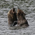 Discover The Wildlife Of North America