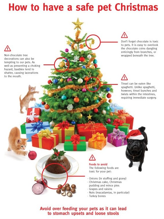How to have a safe pet Christmas