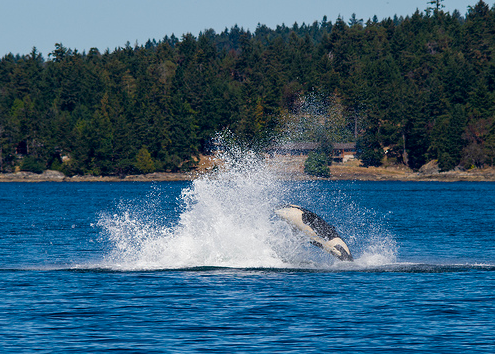 Where To Watch Whales In North America
