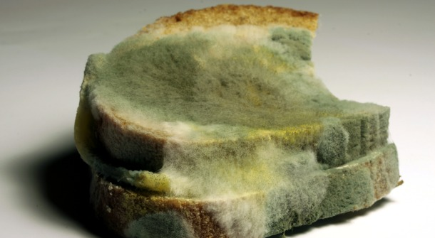 Molds on Foods: Food Safety