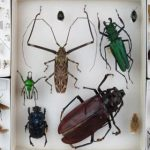 A Bug's Life: 5 Ways To Better Understand The Insect World