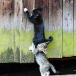 Catting Around? 5 Irregular Cat Behaviors and How To Treat Them