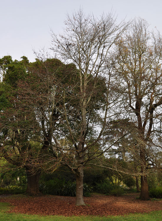 Services Rendered By The Tree Surgeons In Pinner