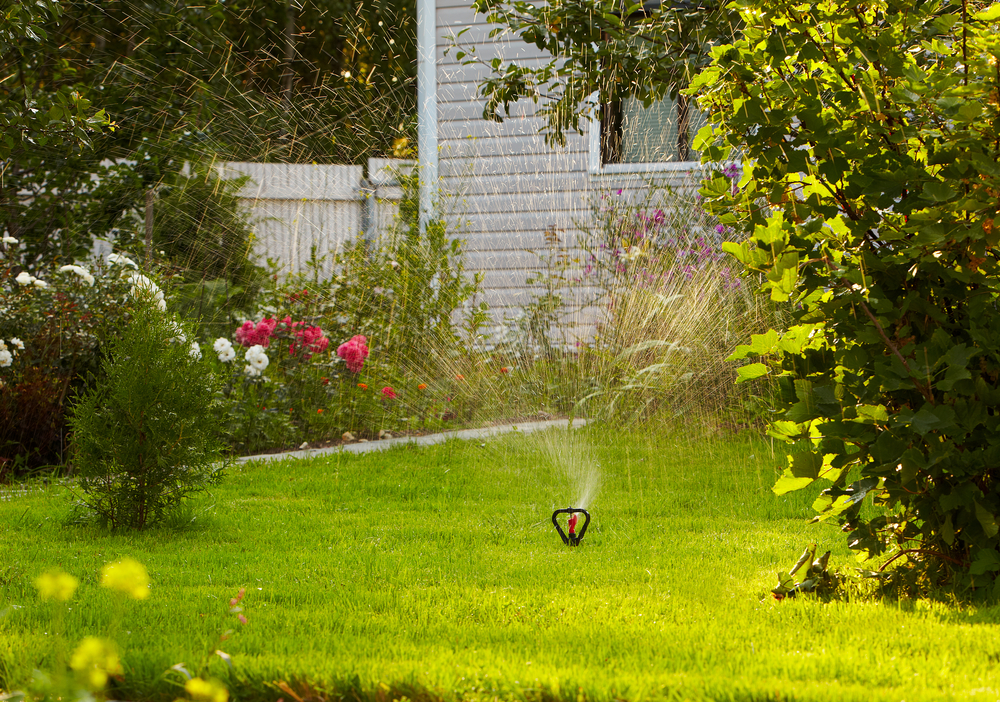 Avoiding Bringing Your Garden Into Your Home