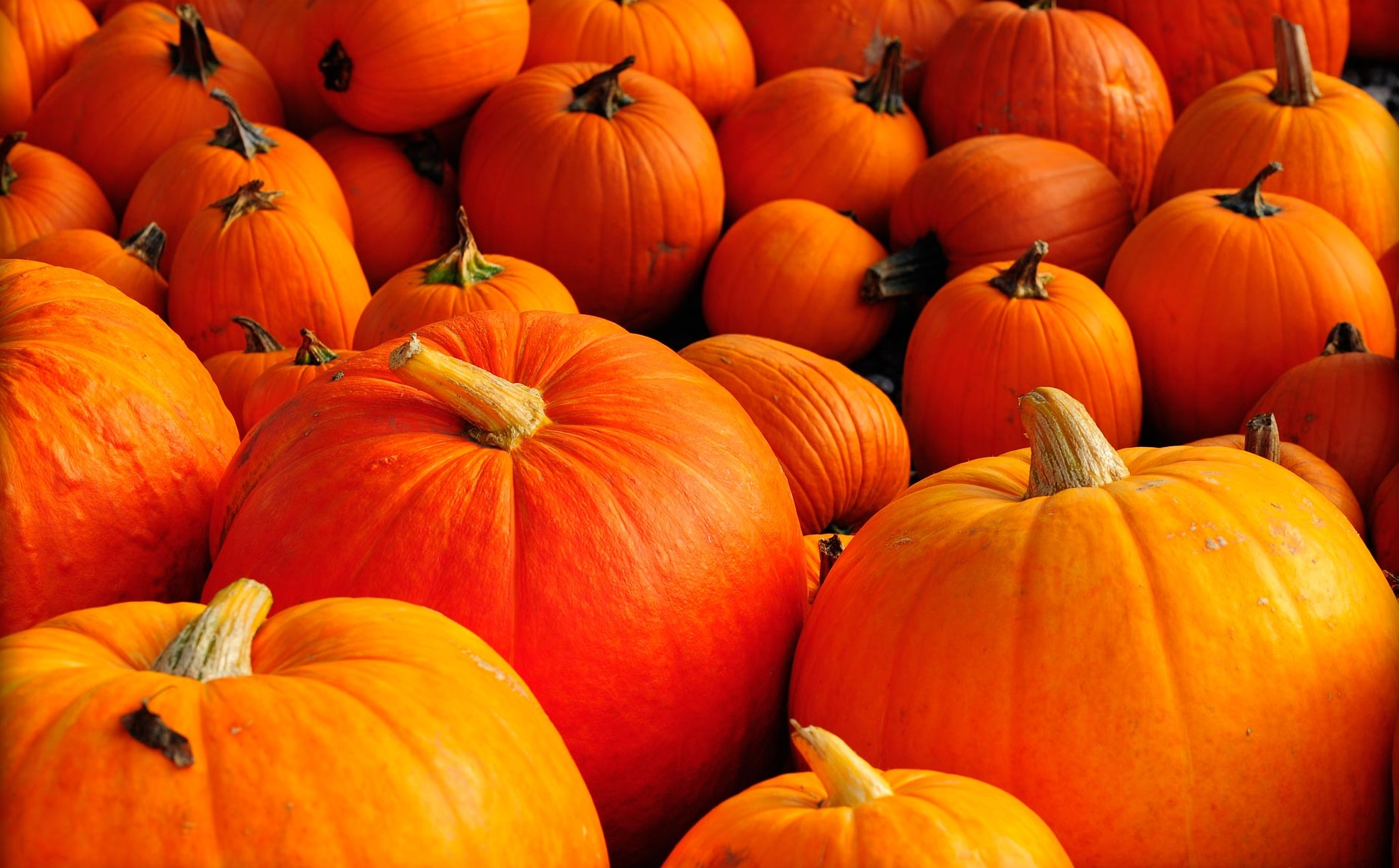 Why Pumpkin Is A Versatile Health Food Superstar