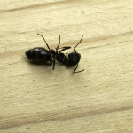 Get Rid of Fleas by Hiring Professional Pest Control Services