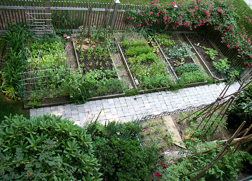 Choosing the Best Container for Your Vegetable Gardening