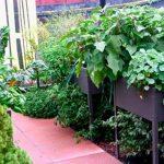 Finding The Best Way Of Gardening Depending On Your Needs