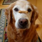 Old Dog, New Tricks - 5 Ways To Properly Care For Your Elderly Friend