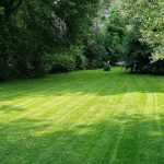 Essential Tips For A Greener Lawn