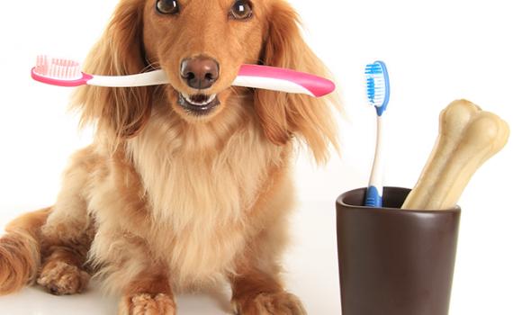 Importance Of Proper Dog Care