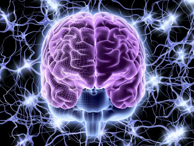 Brain Recovery From Alcohol Abuse