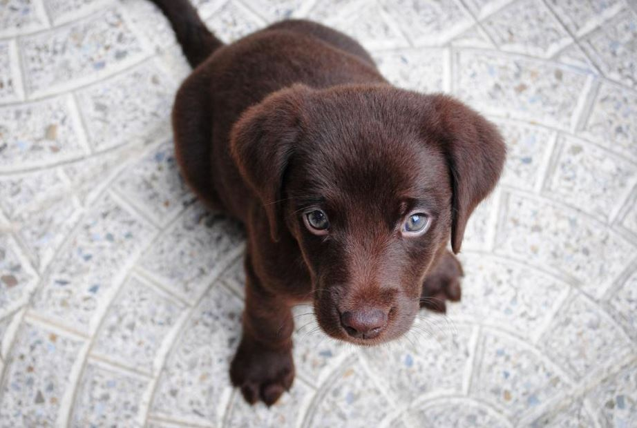 New Addition? Tips For Socializing A Shy Puppy