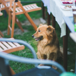 6 Tips For A Sensational Summer Yard Party
