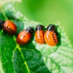 How To Keep Unwanted Pests Out Of Your Garden