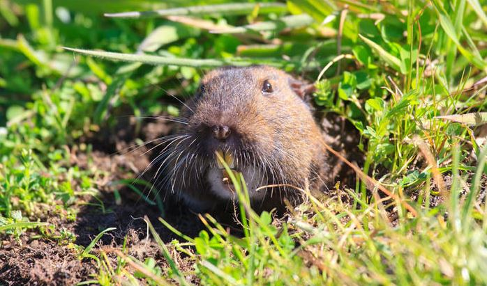 Repel The Rodents: 6 Tips To Protecting Your Yard From Pests