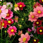 How Flowers Share An Important Space In Your Life