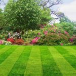Planning For Landscape: Know What Kind Landscape Services You Require