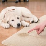 Pet Stains - Do They Ruin Carpet For Good