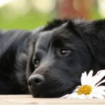 How To Remember Your Deceased Pet and How To Let Go