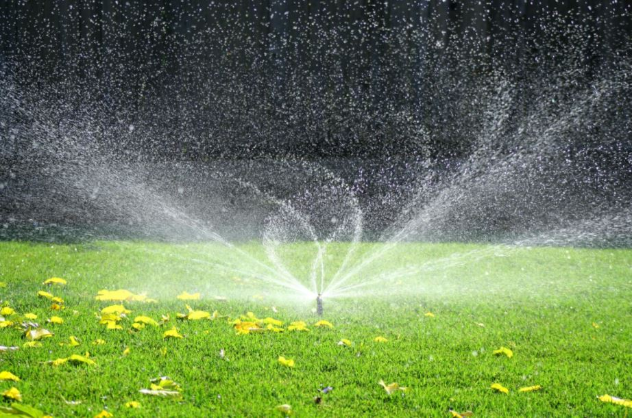 5 Smart Investments to Make in Your Yard This Summer