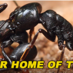 Here's How To Get Rid Of These 4 Common Pests This Summer