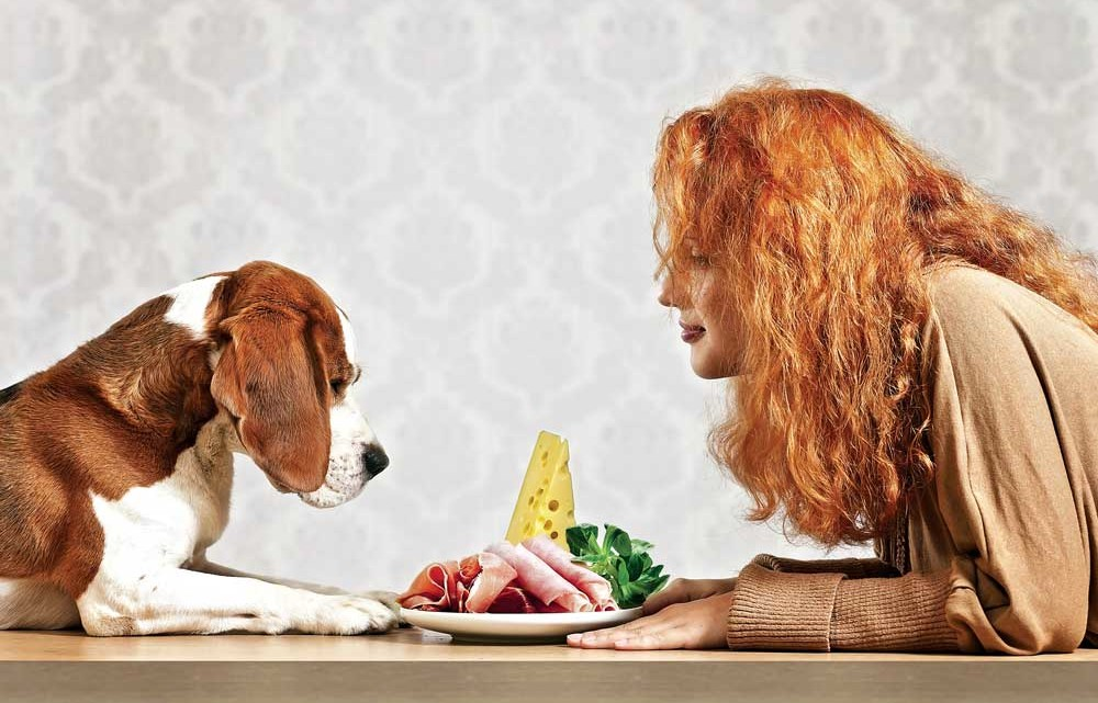 How To Choose The Perfect Pet Food