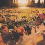 The Art Of Landscaping: How To Take Care Of Your Yard This Fall
