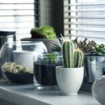 Sunlight, So Bright: How Lights Help Your Indoor Plants To Stay Healthy