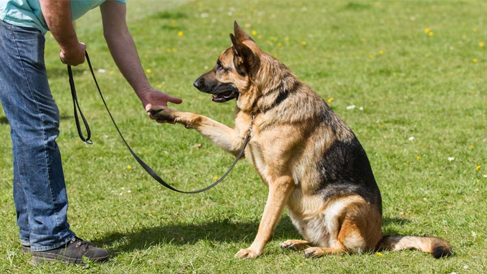 Dog Training: The Necessity Of Every Dog Owner