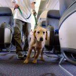 How Do Pet Export Service Providers In UK Help Pet Owners?