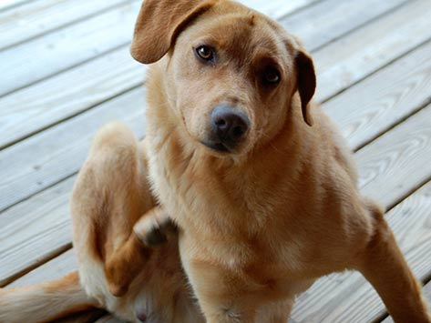 Itch Be Gone! How to Get Rid of Fleas on Your Dog