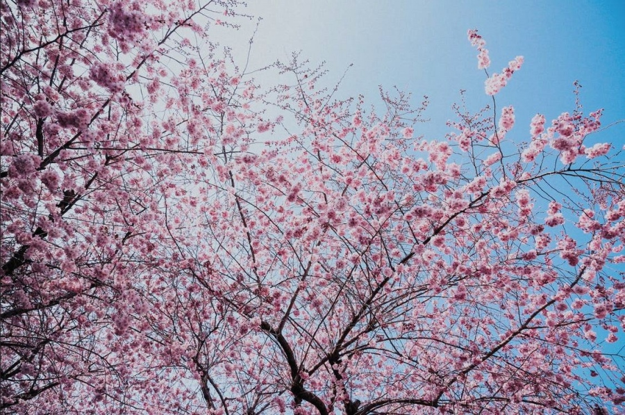 Spring Weather: How To Prepare Your Home For Varying Temps