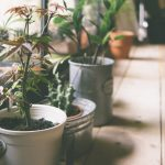 Why Do You Need Houseplants In Your Home?