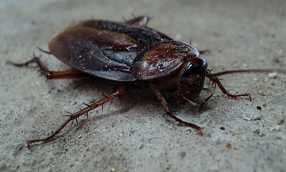 DIY Roach Removal: How To Make Your Efforts Effective