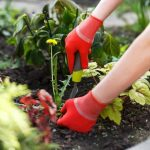 Protecting Your Summer Garden: 4 Ways To Keep Pests Out Of Your Crops
