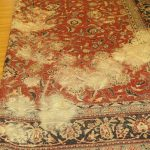 4 Common Carpet Cleaning Mistakes in summer